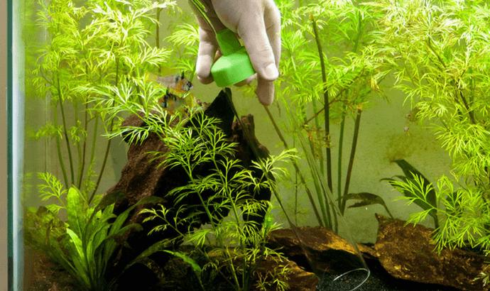 Clean a Fish Aquarium